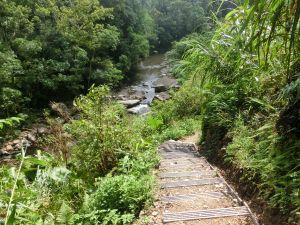 金瓜寮魚蕨步道.九芎根親水公園