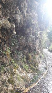武界茶園 及鐘乳石