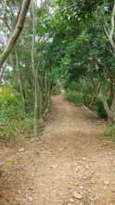 大肚山環保公園步道