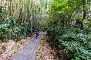 迷糊步道 - 綠色竹林步道.輕鬆親子健行輕量級路線推薦