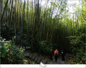 阿里山樂野-迷糊步道順走福山古道