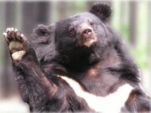 【保育】遇到台灣黑熊該怎麼辦?