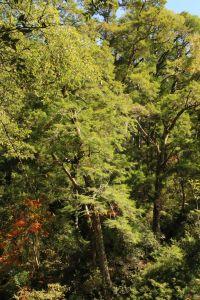 桃山瀑布步道