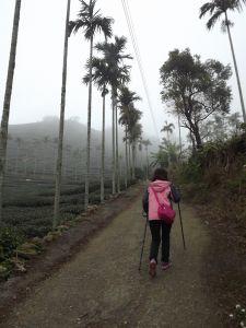 20180130梨子腳山步道