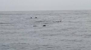 20160522北方三島生態考察
