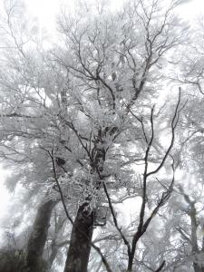 2018.2.3 太平山美麗沒有極限