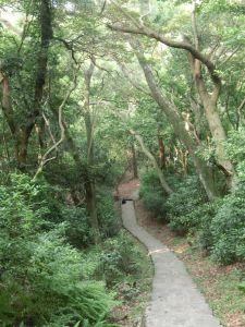 忠義山.雕塑公園.關渡親山步道