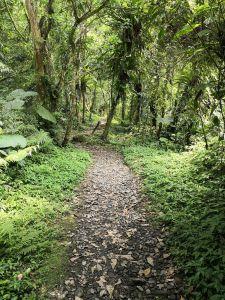 包子的郊山健行筆記-松羅國家步道