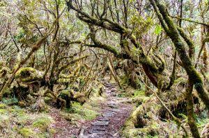 太平山一日遊 Part 2 : 翠峰湖環山步道