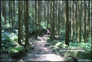 新竹關西。馬武督探索森林。元氣步道。綠光小學。楊梅老樹。瀑布群。