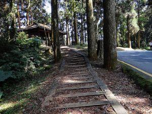 大學池木屑步道