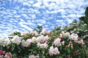 小奇萊賞花