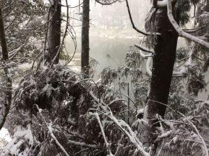 陽明山の雪