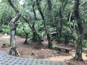 滿月圓森林步道 林口森林步道