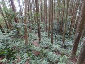台灣小百岳第31座-鵝公髻山之三角點