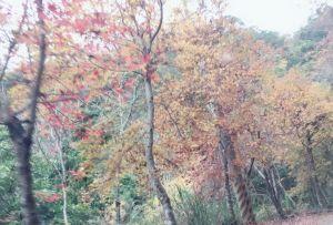 鎮西堡巨木群步道(B區)