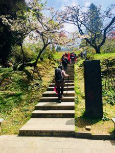 1070405-7阿里山櫻之旅