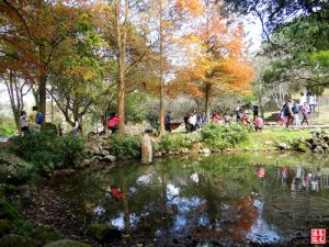 【桃園】溪洲公園步道落羽松之美