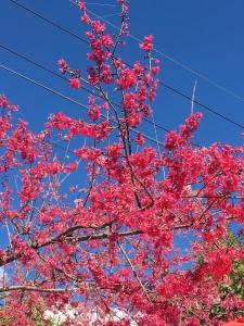農曆年走走春