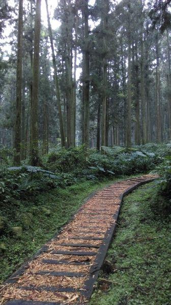 溪頭景觀步道