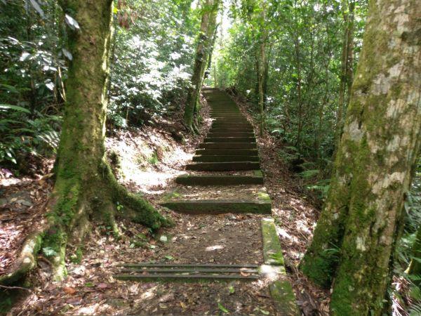 綠意盎然東藤枝山步道