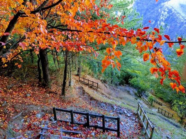 桃山登山步道楓紅