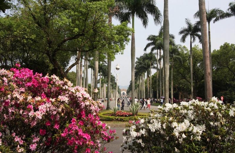 台大椰林步道
