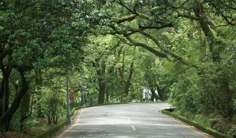 竹子湖環狀步道