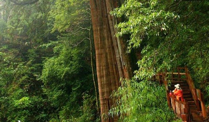 大雪山森林遊樂區森林浴步道