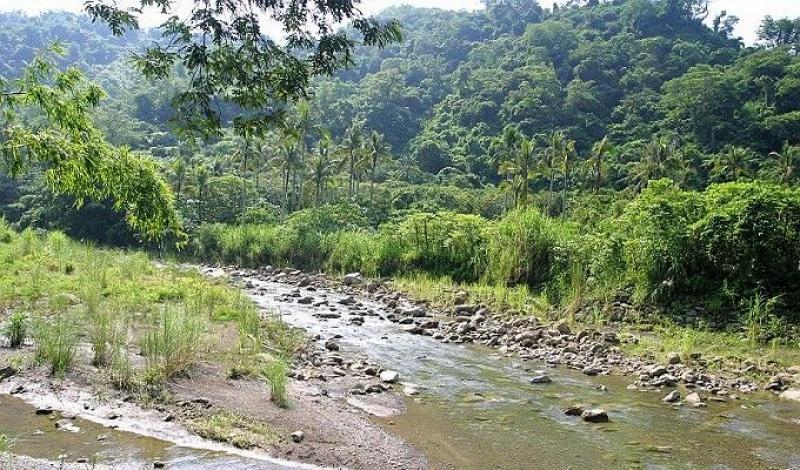 美濃雙溪樹木園步道