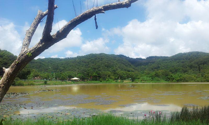 東源森林遊樂區哭泣湖步道