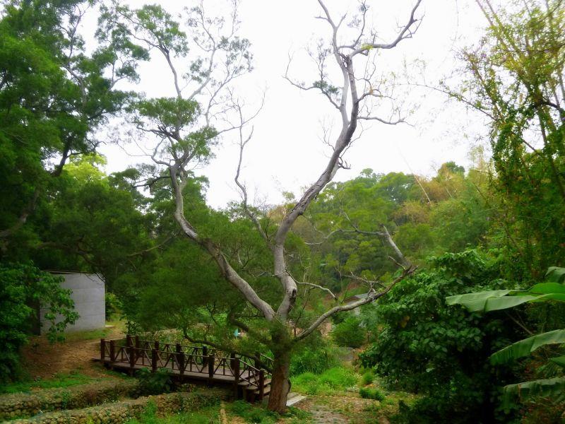 瑞井古井步道、瑞井登山步道